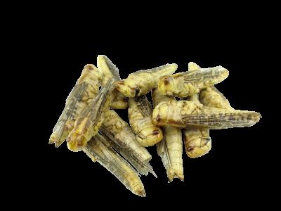 Græshopper